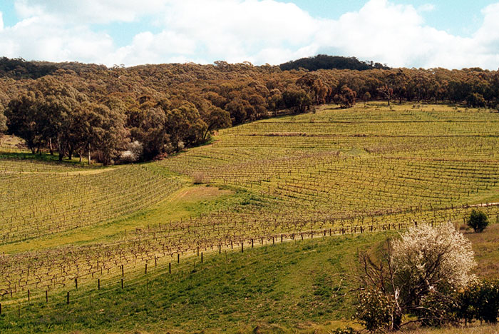 Clare Valley attractions